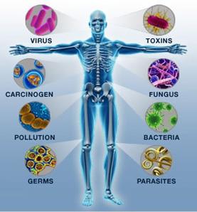 นิวทริก้าช่วยฟื้นฟูเซลล์ ทำให้ร่างกายแข็งแรงขึ้น