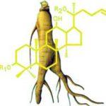 สารจินเซนโนไซด์ที่ได้รับจากCovermorส่งผลดีต่อร่างกายอย่างไร