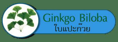 Ginkgo Biloba ใบแปะก๊วย