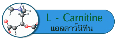 กรดอะมิโน L - Carnitine