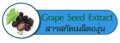 สารสกัดเมล็ดองุ่น Grape Seed Extract