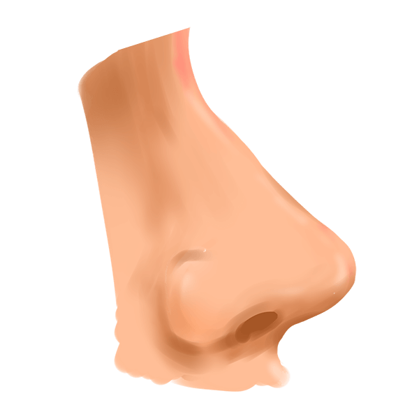 อวัยวะที่เรียกว่า จมูก