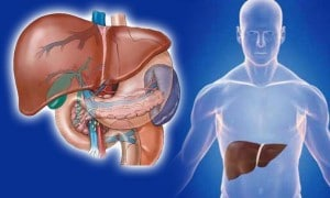 ไขมันพอกตับ เสี่ยงกับมะเร็ง ป้องกันได้ด้วยเบต้ากลูแคน