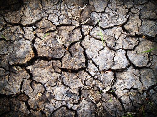 ภัยแล้งจะส่งผลเสียต่อผลิตการเกษตร