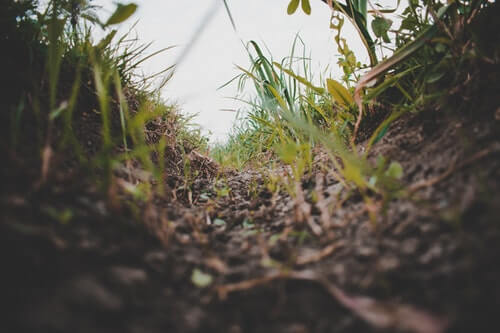 ดินที่ดี ธาตุอาหารสมบูรณ์ ย่อมเหมาะกับการเพาะปลูก
