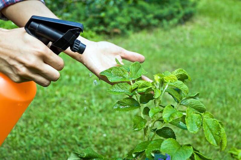 ปุ๋ยเคมีคือธาตุอาหารของพืช เพื่อบำรุงพืช