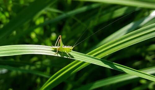 แมลงศัตรูพืชสร้างความเสียหายต่อผลผลิตการเกษตร