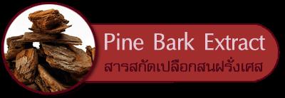 สารสกัดจากเปลือกสนฝรั่งเศส Pine Bark Extract