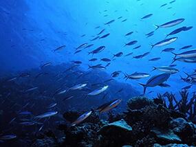 คอลลาเจนจากปลาทะเล fish collagen