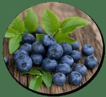 ผงบลูเบอรี่ blueberry
