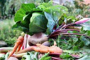 %e0%b9%80%e0%b8%81%e0%b8%a9%e0%b8%95%e0%b8%a3%e0%b8%ad%e0%b8%b4%e0%b8%99%e0%b8%97%e0%b8%a3%e0%b8%b5%e0%b8%a2%e0%b9%8c-organic-farm