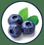 Blueberry Extract มีวิตามินบำรุงสายตา