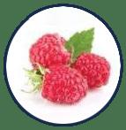 Raspberry extract ช่วยบำรุงสายตา