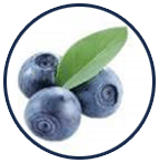 bilberry extract ช่วยบำรุงดวงตา