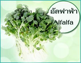 ประโยชน์ของอัลฟาฟ่าที่มีใน T Chloro Plus