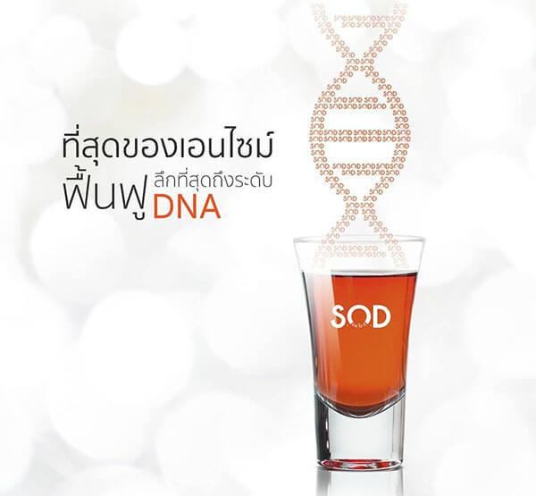 ที่สุดของเอนไซม์ฟื้นฟู DNA และต้านอนุมูลอิสระ S.O.D