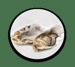หอยนางรมช่วยเพิ่มสมรรถภาพทางเพศ