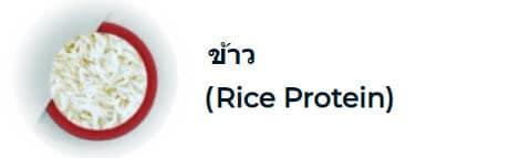 ข้าว ( Rice Protein)