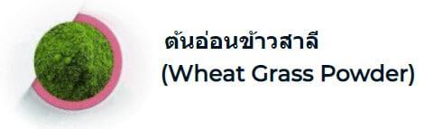 ต้นอ่อนข้าวสาลี (Wheat Grass Powder)