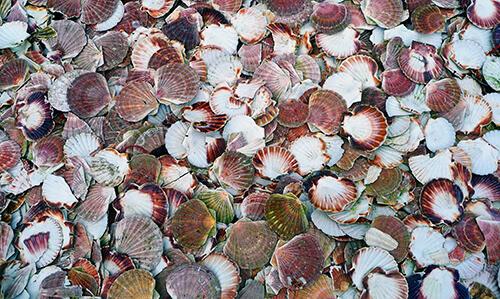 คนที่แพ้อาหารทะเลควรระวังสารประกอบจากเปลือกหอย เปลือกปู