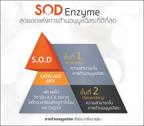 SOD enzyme คือสุดยอดสารต้านอนุมูลอิสระ สำหรับคนที่ใส่ใจดูแลสุขภาพ