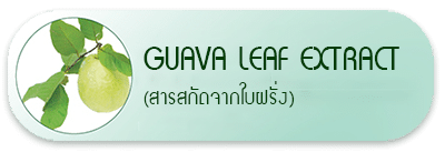 Guava Leaf Extract (สารสกัดจากใบฝรั่ง)