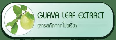 Guava Leaf Extract (สารสกัดจากใบฝรั่ง)
