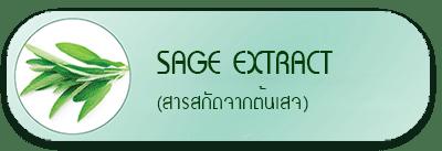 sage extract สารสกัดต้นเสจ
