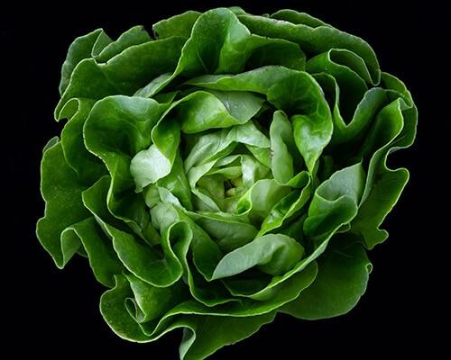 ควรเลือกทานผักที่สดใหม่ ไม่มีเหมือก หรือช้ำเน่า