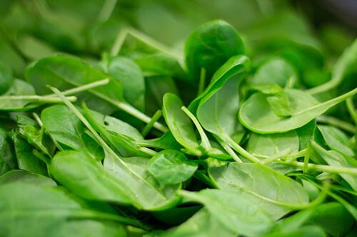 มีการปนเปื้อนเชื้อแบคทีเรียในผักปวยเล้ง ทำให้ท้องร่วงระบาด