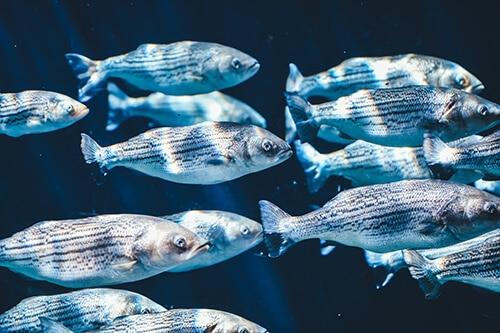 คอลลาเจนจากปลาทะเลน้ำลึก ทำให้ผิวพรรณเรียบเนียนและเต่งตึงมากขึ้น