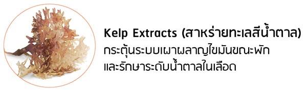 สารสกัดสาหร่าย Kelp Extract