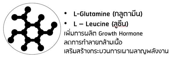 L Glutamin แอลกลูตามีน