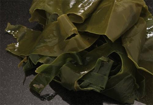 Kelp Extract (สาหร่ายสีน้ำตาล)