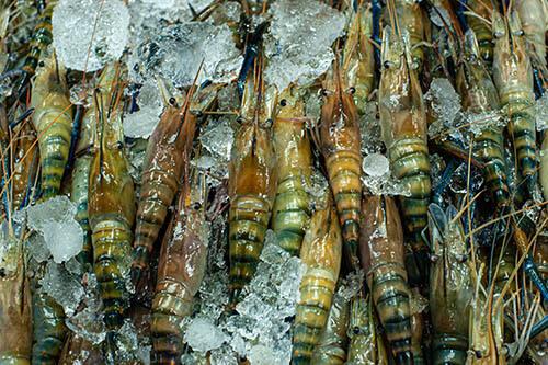 สารพิษจากอาหารทะเล