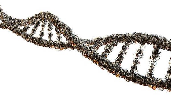 รหัสพันธุกรรมหรือ DNA