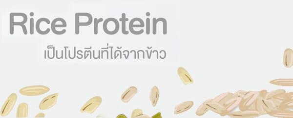 โปรตีนจากข้าว Rice Protein