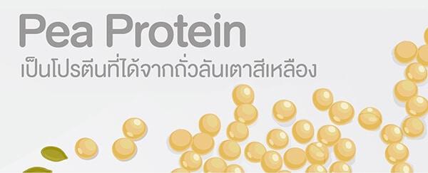 Golden Pea Protein ถั่วลันเตาสีเหลืองทอง